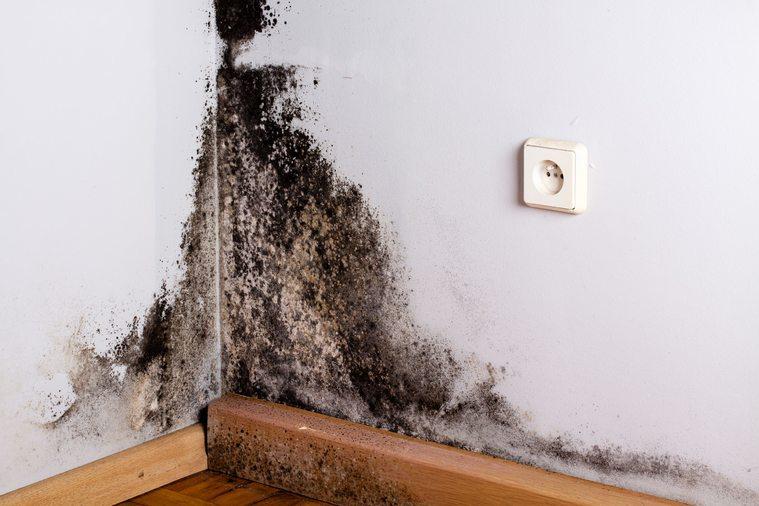 domowe sposoby na usunięcie pleśni